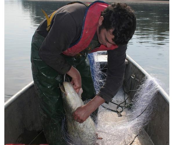 Nicolas sortant un poisson de son filet